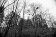 Pripyat, Chernobyl Exclusion Zone (#6847)